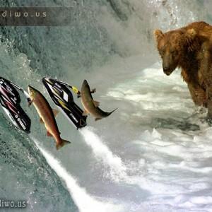 Zvířecí fotomontáže