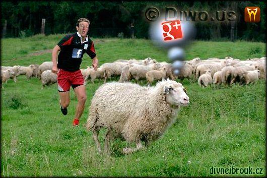 Divnej Brouk - Facebook, Google Plus, Mark Zuckerberg, sheep, ovce