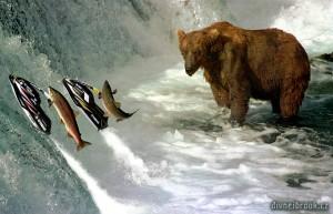 Diwous - Losos, hnědý medvěd, salmon, bear, Yamaha, řeka, Brook, McNeil, Alaska, vodopád, řeka, Aljaška, Fuck Off, vtip, humor, National Geographic, Divnej Brouk, kodiak, lov ryb, vodní skůtr, skok, Kodiak, fishing, Jet Ski, jump