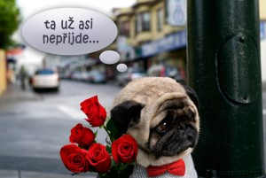Diwous - Smutný pejsek, mops, pug, sad, psí rande, růže, motýlek, svetr, ulice, vtip, humor, Divnej Brouk, mopsík, mopslík, kytice, pugét, pouliční lampa, psí oblečení, svetr