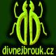 divnejbrouk_avatar.jpg