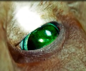 Diwous - Alien Eye (recenze filmu Battleship)