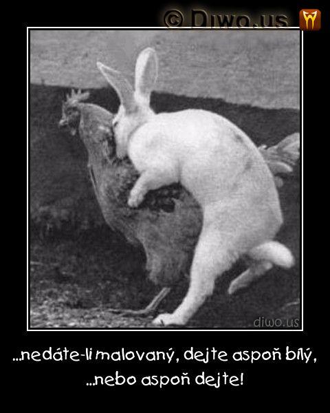 """Diwous - """"...aspoň dejte!"""" Veselé Velikonoce!"""