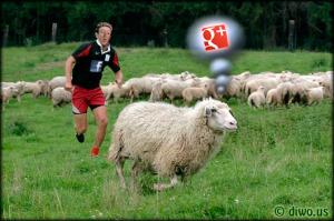 Diwous - Mark Zuckerberg, Facebook, Google Plus, zbloudilá ovce