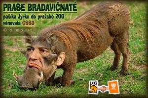 Diwous - Jiří Paroubek, prase bradavičnaté, pražská zoologická zahrada, ZOO Praha, ČSSD, pašík, vtip, humor