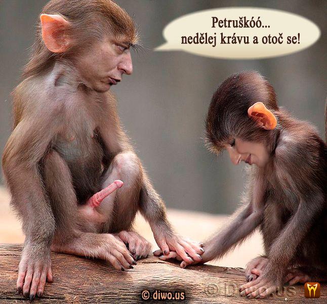 Diwous - Paroubkovi, Jiří Paroubek, Petra Paroubková, opice, penis, sex, erekce, chtíč