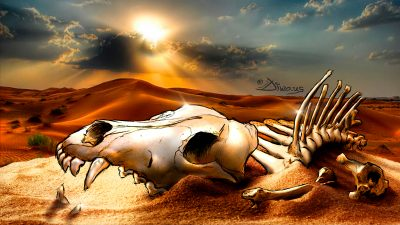 Diwous - Steppe Wolf bones, #diwoselfie, photoillustration, digital illusionist, Art, drawing, cartoon, comics, collage, style, unique technique, Namibia, Kalahari desert, relics, jackal, coyote, skull, sunset, sand, západ slunce, lebka, kosti, ostatky, šakal, kojot, stepní vlk, poušť, písek